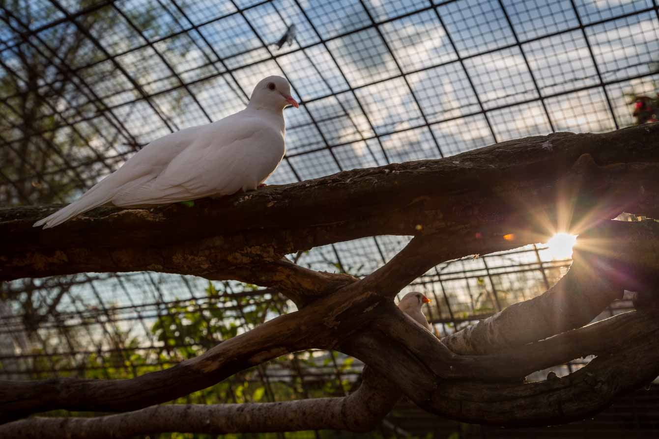 Ferme de Balme oiseaux
