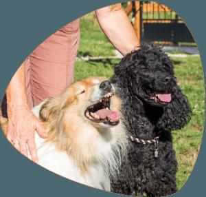 Ferme de Balme - Les chiennes